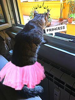 freetoedit gatocute teamo hermoso