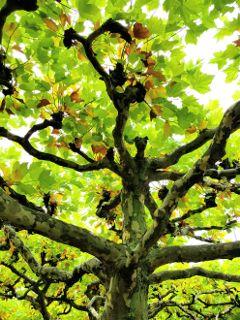 freetoedit trees