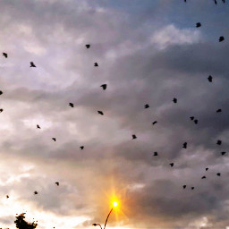 freetoedit birdsphotography birdsinflight birds sky