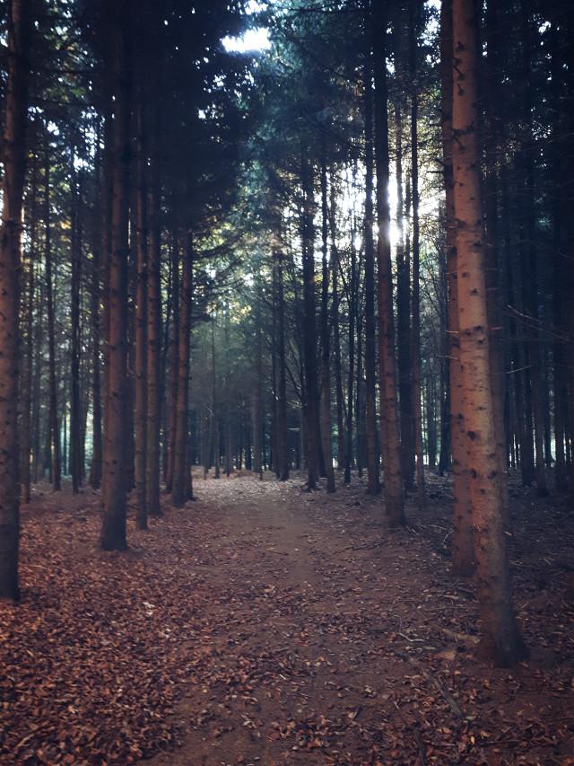 #forest #awalkinthewoods #autumn